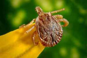 Safe Tick Control | TickKillz.com